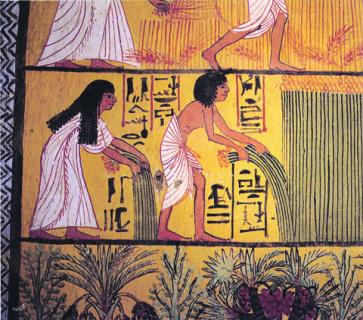 история, древний египет, сельское хозяйство, климат, изменение климата, генная инженерия