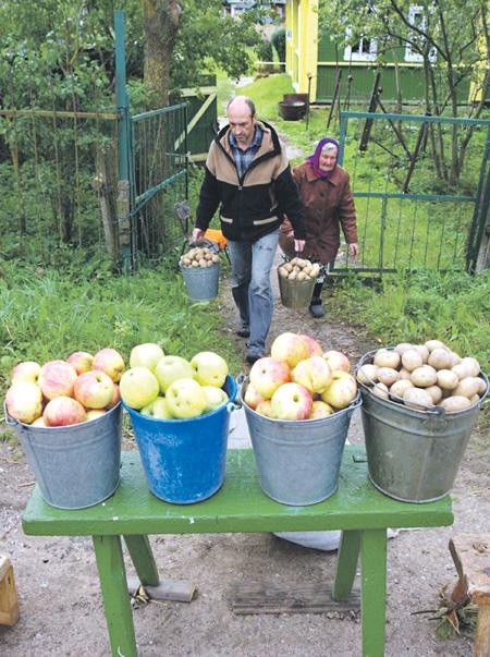 Чтобы продавать свой урожай, почти всем сельским жителям, похоже, придется оформиться как индивидуальный предприниматель. Фото PhotoXPress.ru