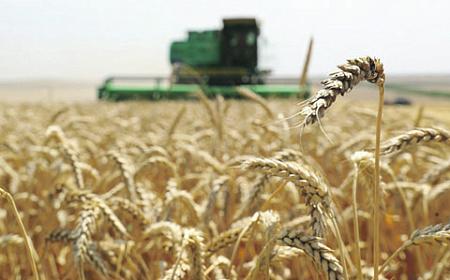 Экспорт русского зерна грозит рядовому потребителю ростом цен нахлеб